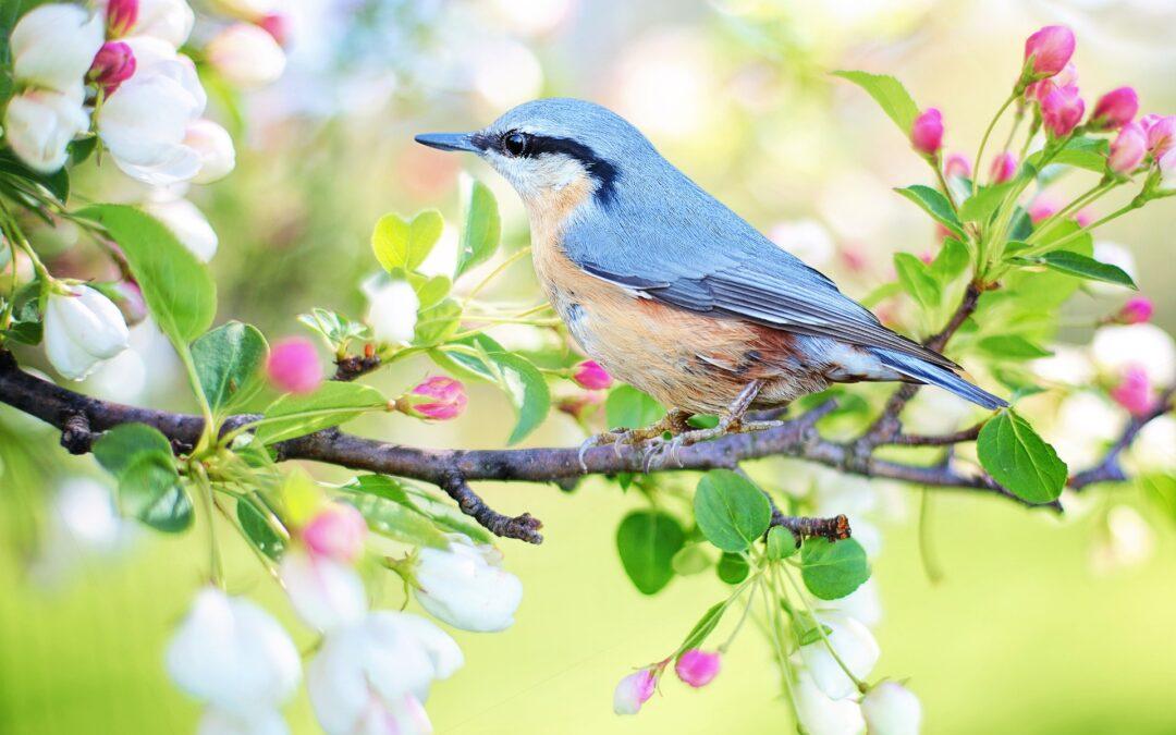 In forma per la primavera, piuttosto che la stanchezza primaverile