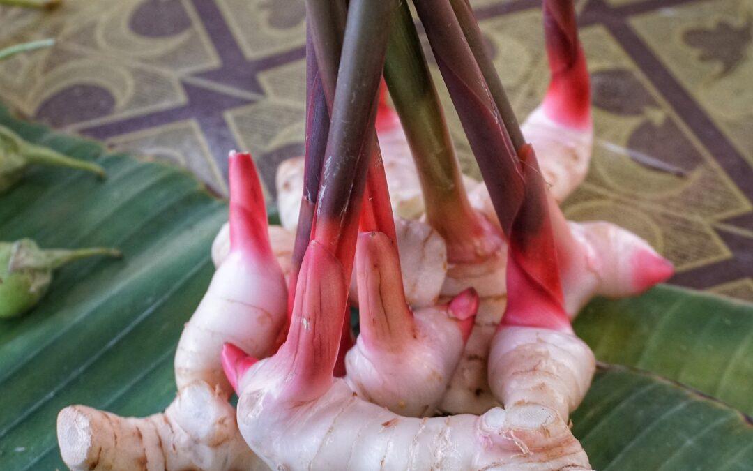 La radice miracolosa: galanga e le sue proprietà medicinali nella fitoterapia
