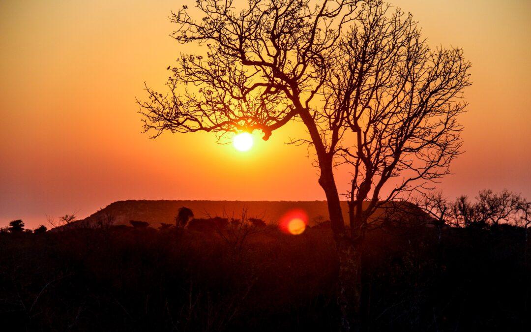 Haronga - un grande albero, di grande effetto!